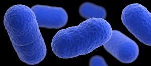 Listeria monocytgenes