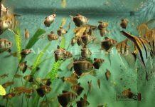 akvarij- terarij