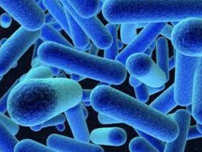 Listeria moncytogenes